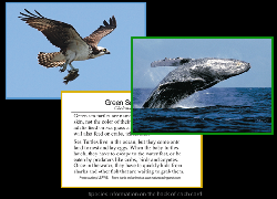 Nature Trading Cards image for Review sites